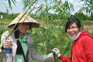 Green Day: Crunch plantation in Phu An in Vietnam
